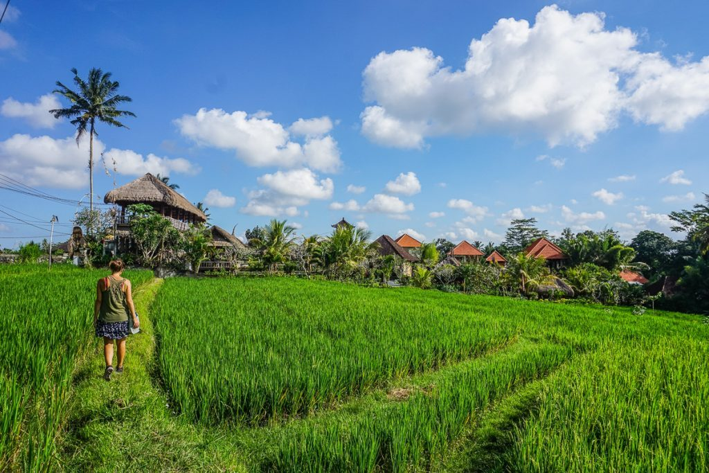 For winter sun visit the rice fields in Ubud, Bali