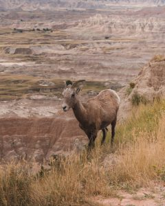 One of the best things to do in South Dakota is visiting the Badlands