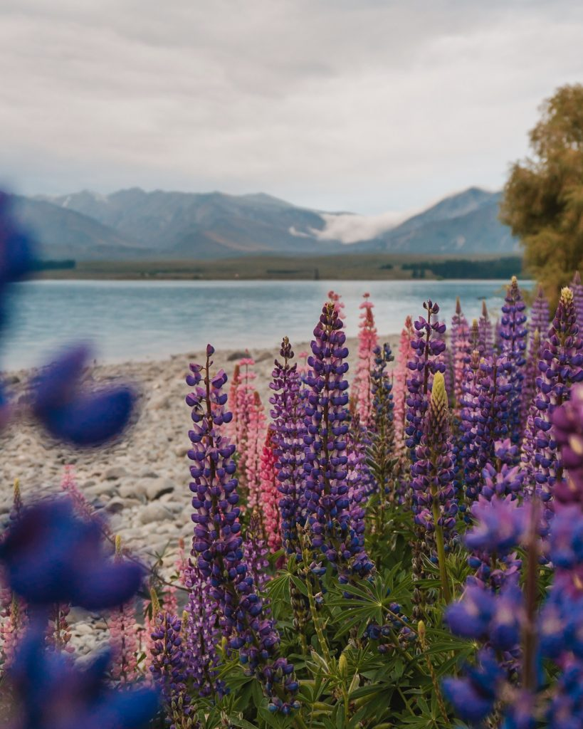Lake Tekapo is possibly one of the most instagrammable places in New Zealand! Don't miss a visit to one of the most beautiful lakes in the world.