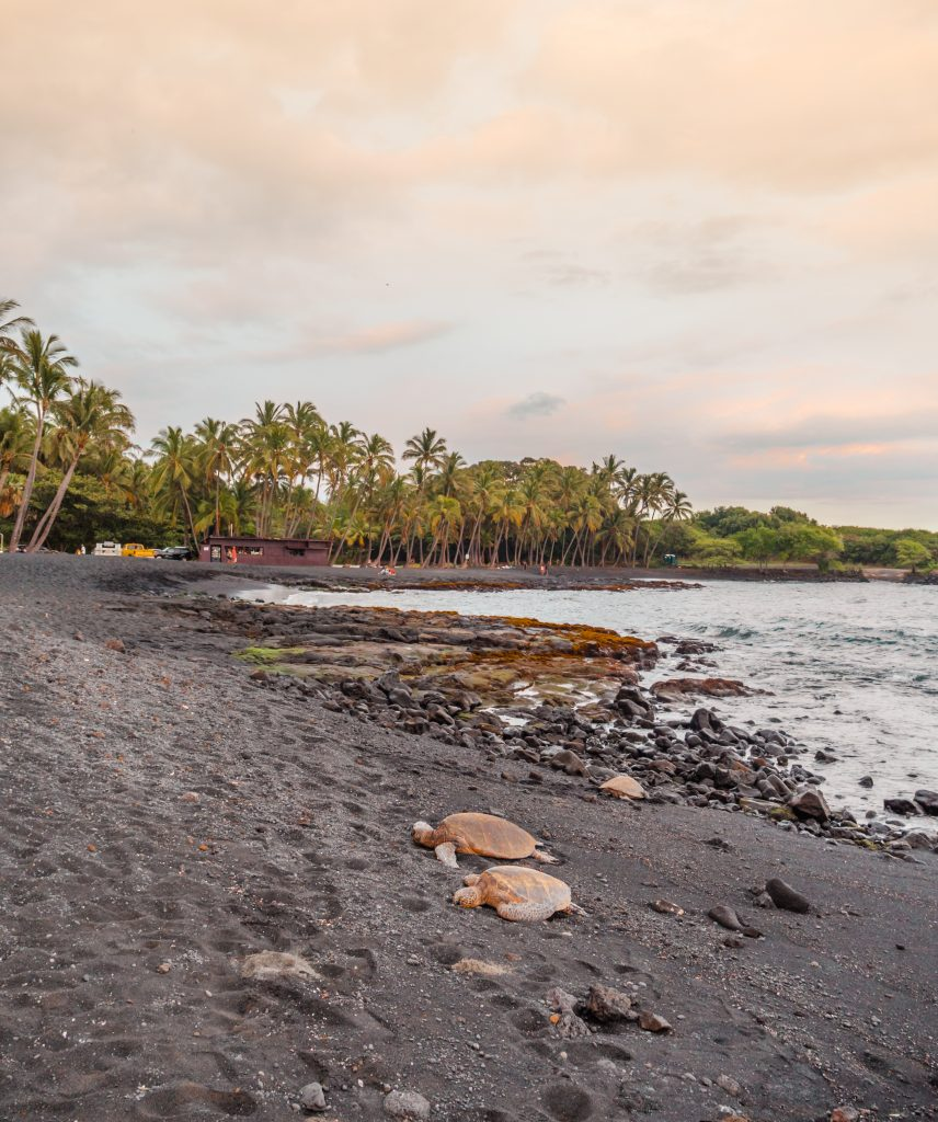The beautiful Punalu'u Black Sand Beach is one of the best places to go on Hawaii's Big Island.
