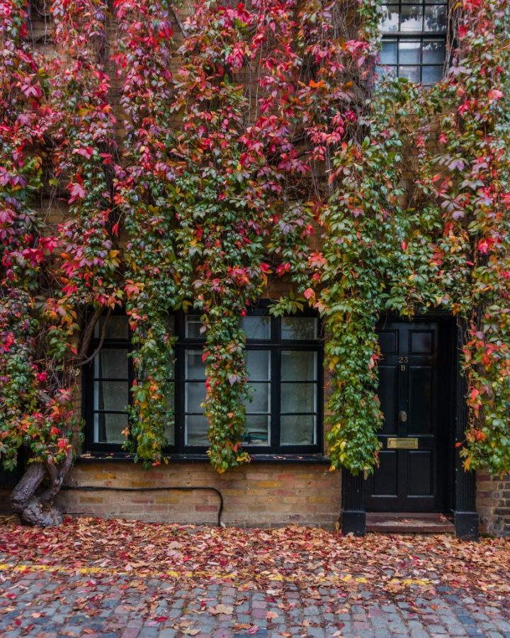 Kynance Mews is one of the most beautiful places in London in autumn