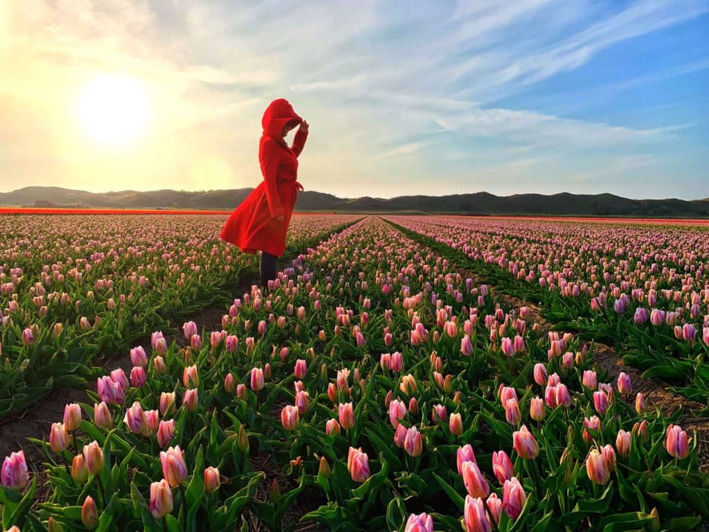 Take a weekend trip from Amsterdam to the island of Texel to see spectacular tulip fields during spring