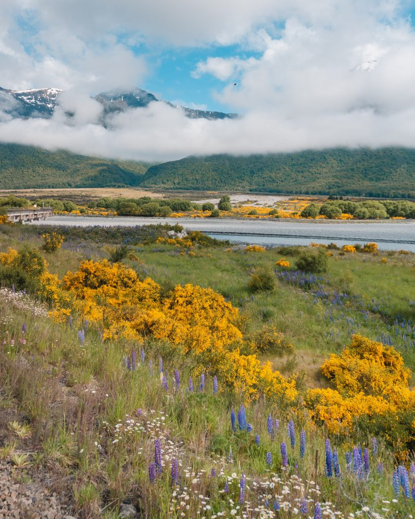 The TranzAlpine is the perfect way of travelling from Christchurch to Greymouth or vice versa - it's considered one of the most scenic train journeys in the world!