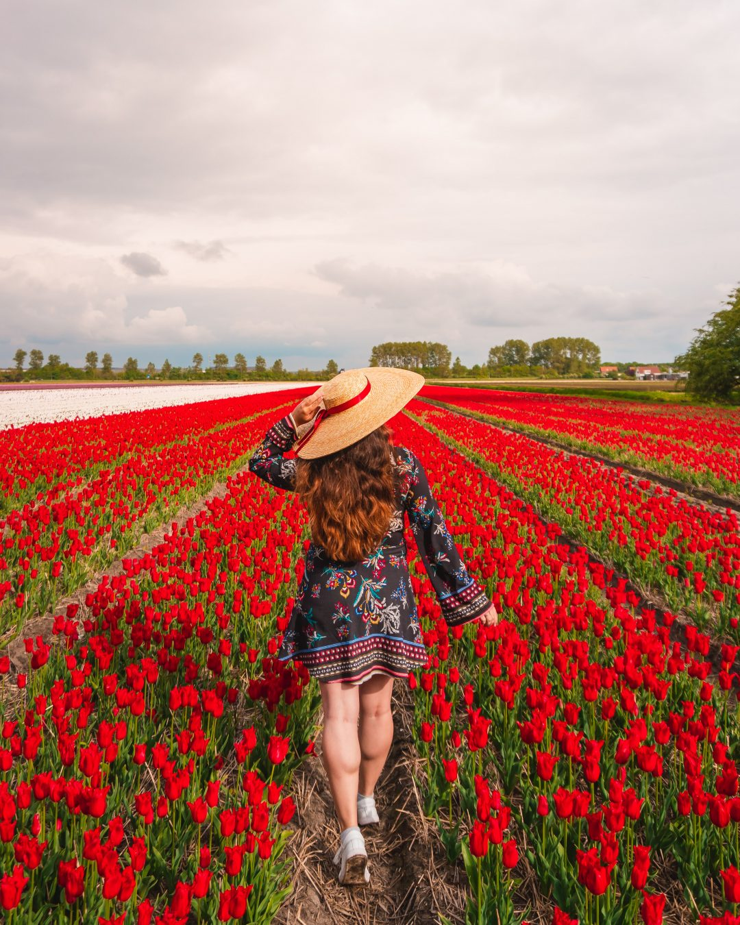There are many incredible tulip fields near Amsterdam and these are my top recommendations!