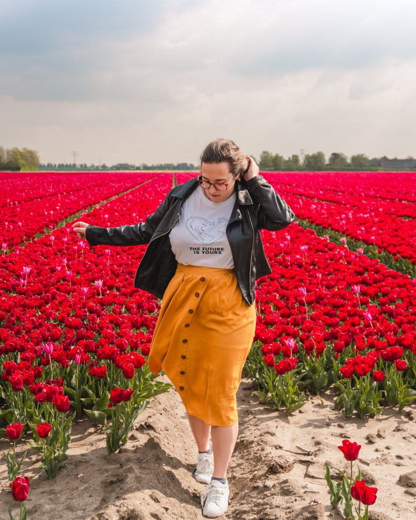 Some of the most beautiful tulip fields in Holland are on the island of Goeree-Overflakkee, in the south of the country.