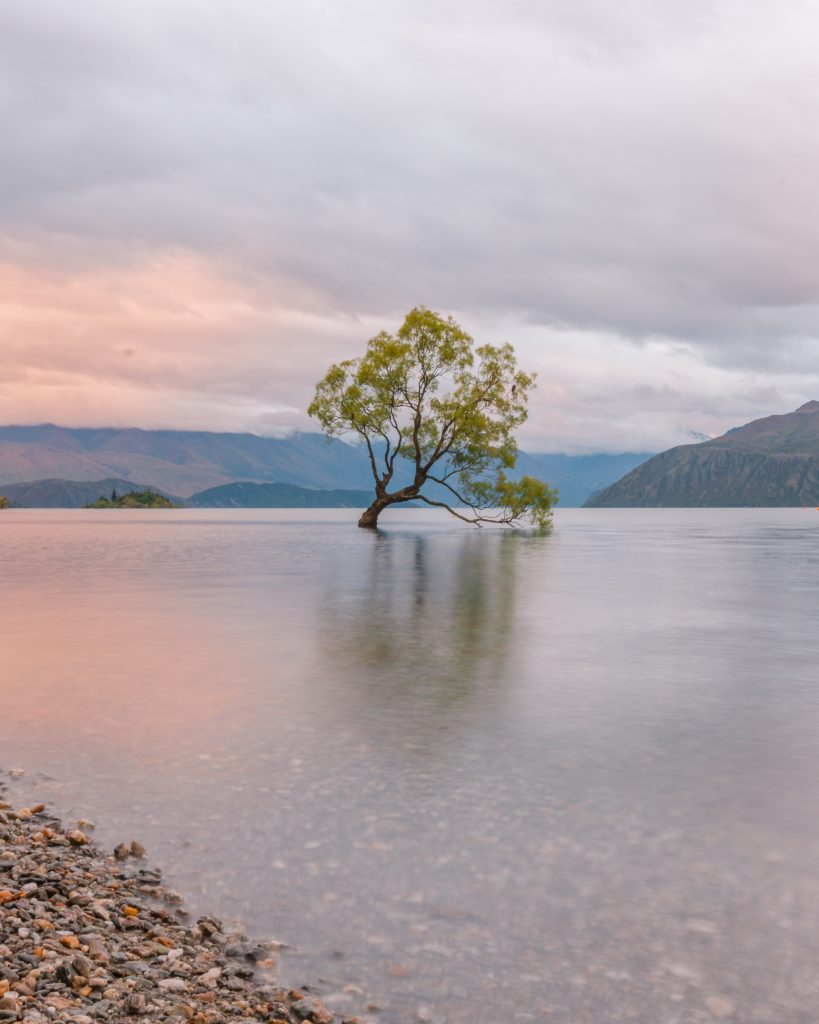 The famous Wanaka tree is a New Zealand highlight in South Island! Wanaka is truly one of the most beautiful places in New Zealand.
