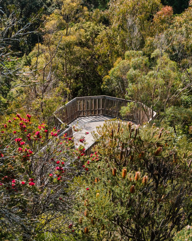 The Wellington Botanic Garden is one of the best things to do in Wellington - with 65 acres of native trees as well as a rose garden and lots more, there is so much to do here.