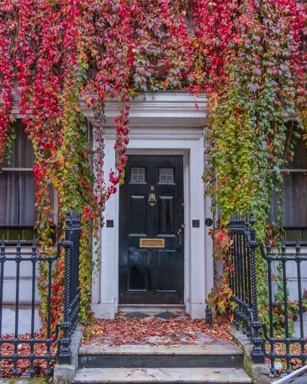 autumn leaves lightroom preset