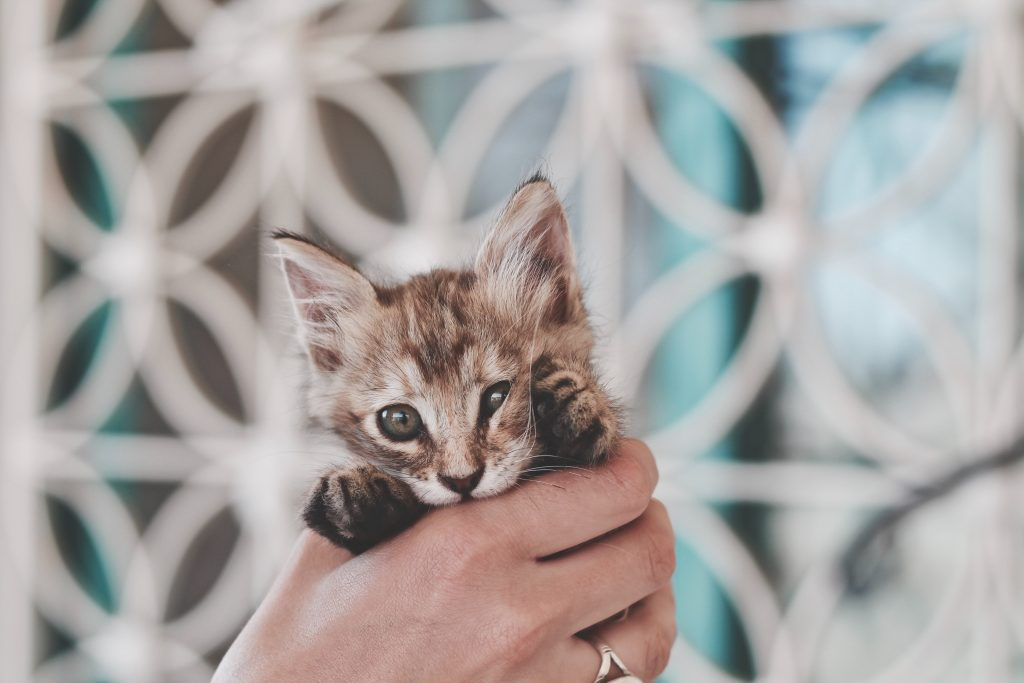 Enjoy a local experience around the world and find friends in the local kittens.